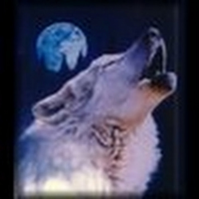 windwolf55x5