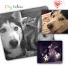 Achilles Husky Puppies
