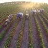 Riverina Wine Grapes