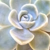 Crie e Recrie by Elaine Vieira