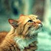 Adopt My Cat