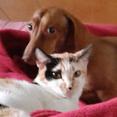Nina & Kitty