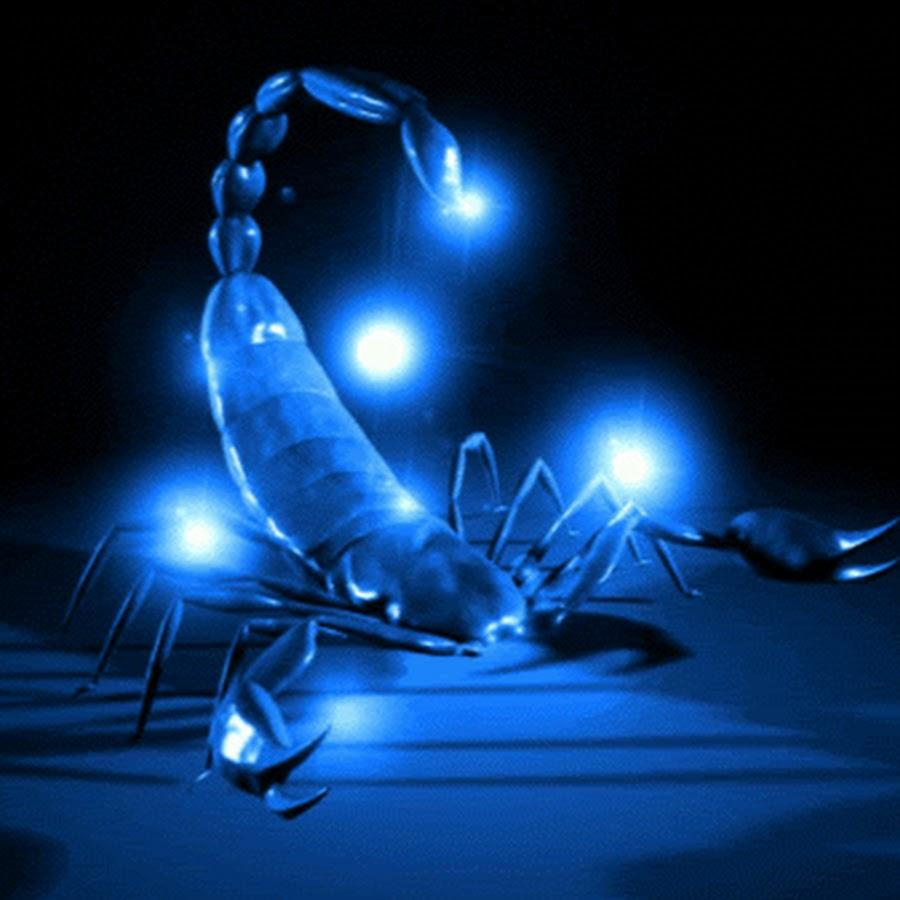 Картинки на телефон скорпиона