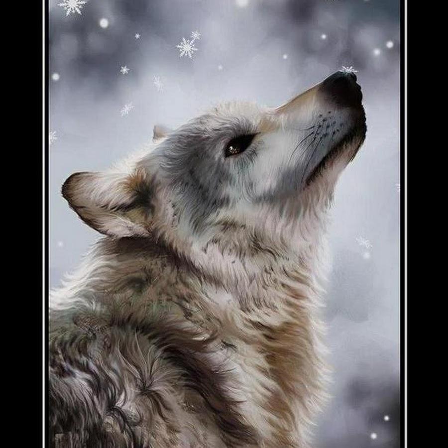 Свадьбу азербайджанском, картинка волков с надписью