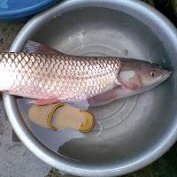 giang truong Fishing