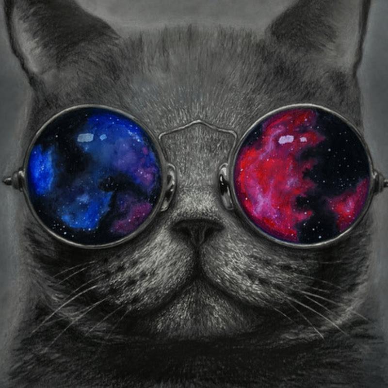 Картинки кот во очках космос