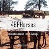 4BP Horses