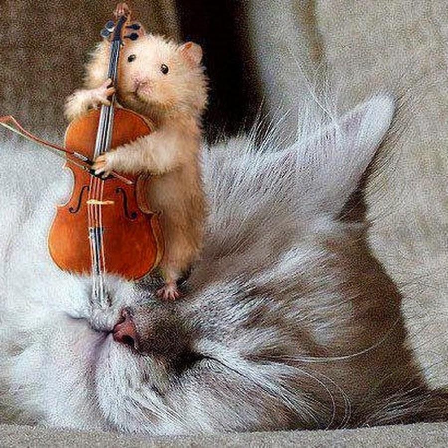 Прикольные картинки с виолончелью, открытки день