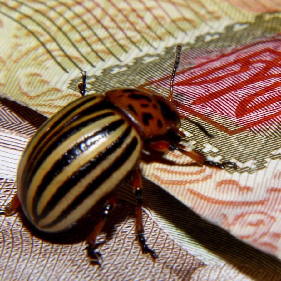 Открытка добрый, картинки прикольных жуков