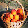 Grossen Peaches