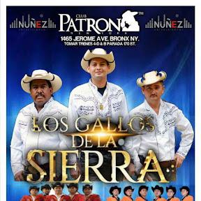Los Gallos De La Sierra Tx sosa
