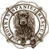 Boykin Spaniel Rescue