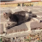 M Brachi