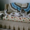 rejoycewhippets