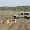 Leopard Tours - Tanzania