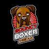 Bouncy Boxer Media