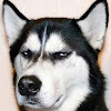 Grumpy Dogs
