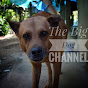 The Big Dog Channel