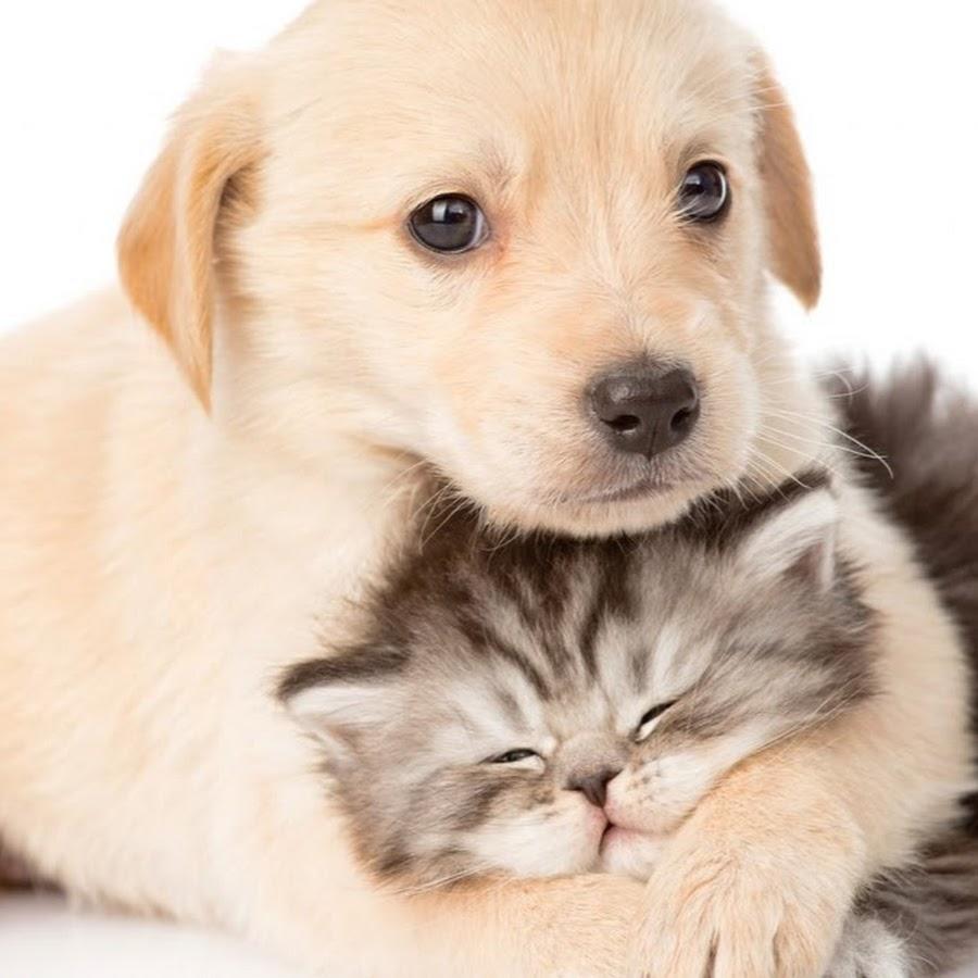 Милые и смешные картинки котят и щенят