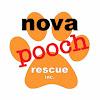 Nova Pooch