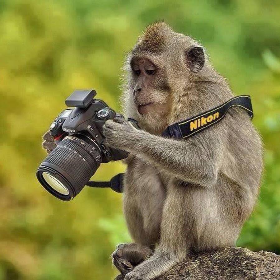 Первоклассницей картинки, картинки прикольные фотоаппаратов