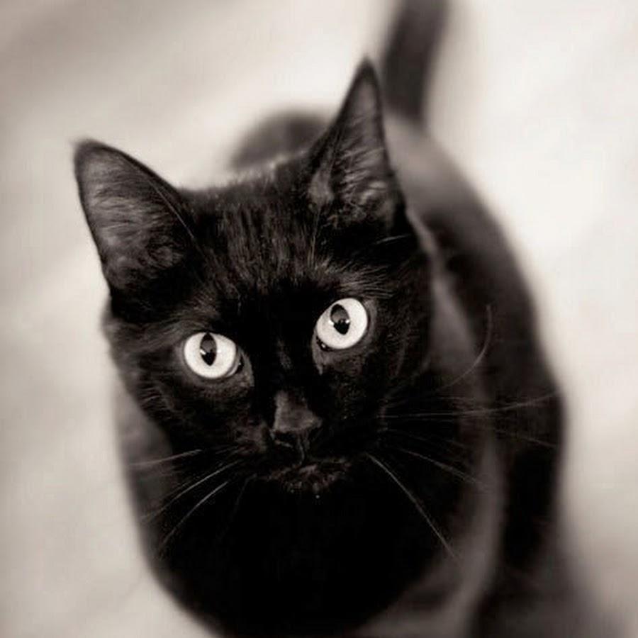 Днем, картинки с черными кошками на аву