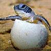 Sea Turtle Trackers