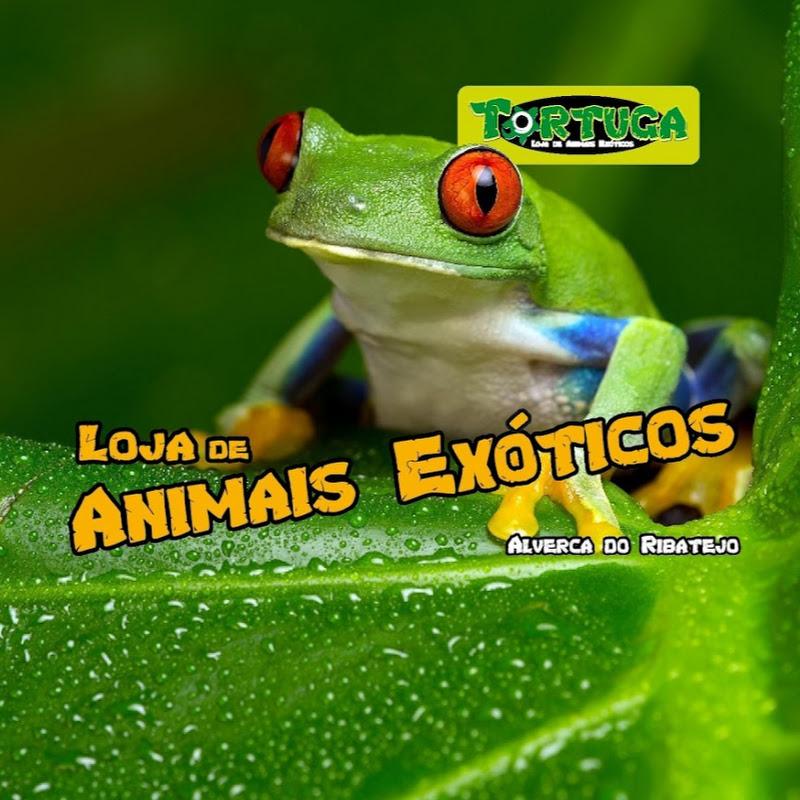 Tortuga PetShop – Animais Exóticos