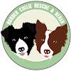 Border Collie Rescue & Rehab of Texas