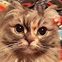 日本一猫好きチャンネル