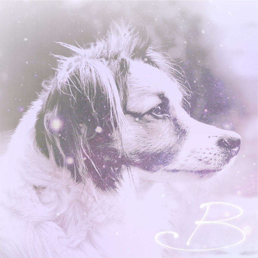 wounding dog brandy morace - 900×900