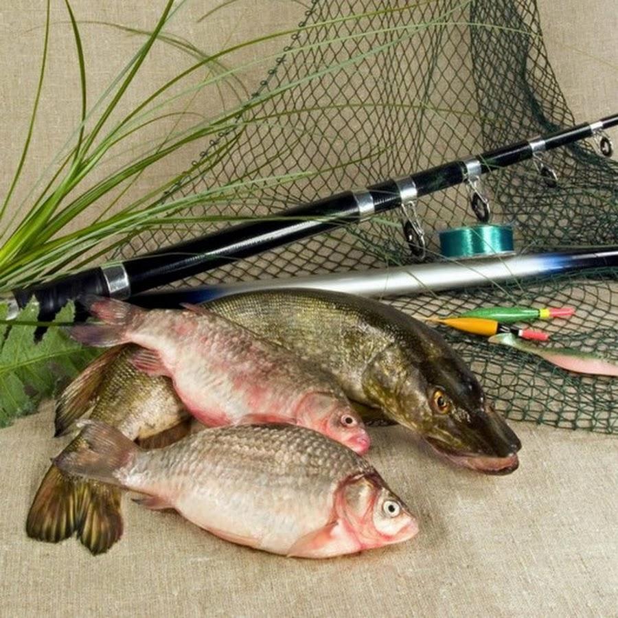 Фотографии открыток о рыбалке, котами смешные