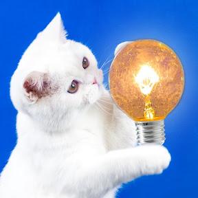 간단한 아이디어 — SIMPLE IDEAS