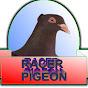 Bholu Veer Racer Pigeon