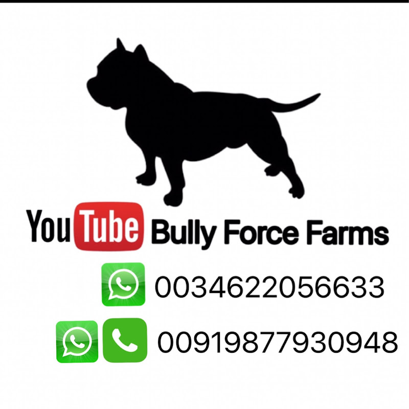Pitbull dog farms in punjab American bully ||Rambo||father meets