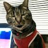 我輩はぽんである!I am a Cat named Pon!
