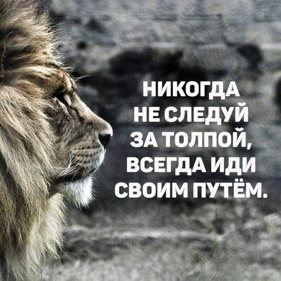 Прикольные картинки львов с надписями со смыслом