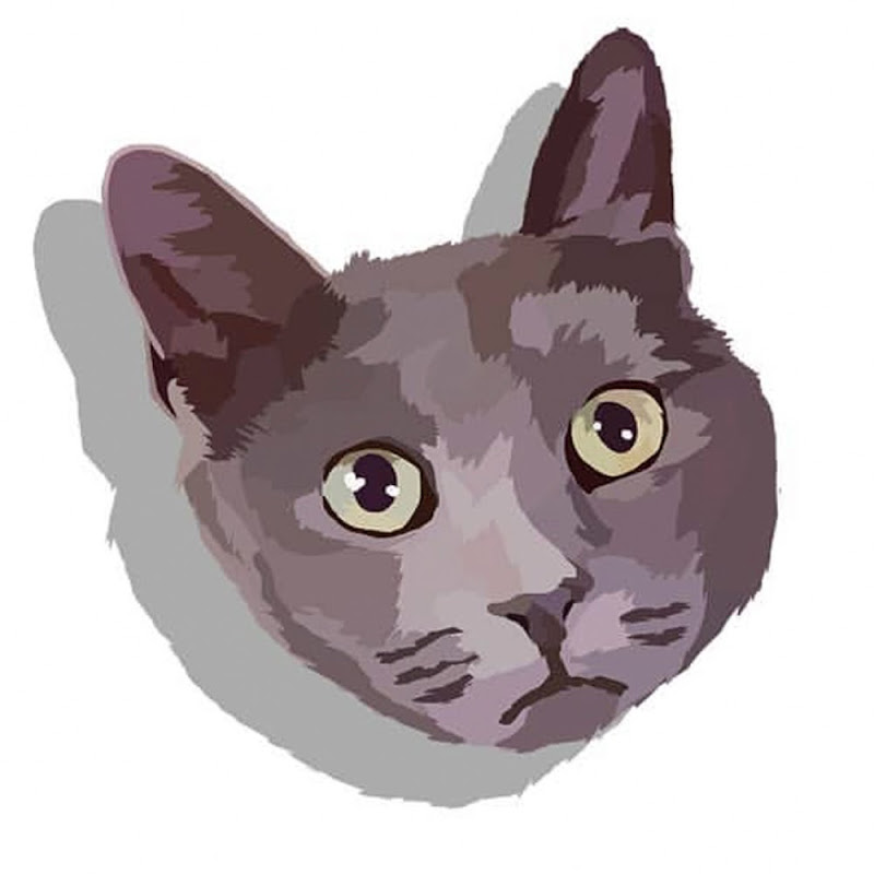 Mačka Jackie