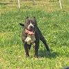 Midnighttrainbullies kennel/homestead