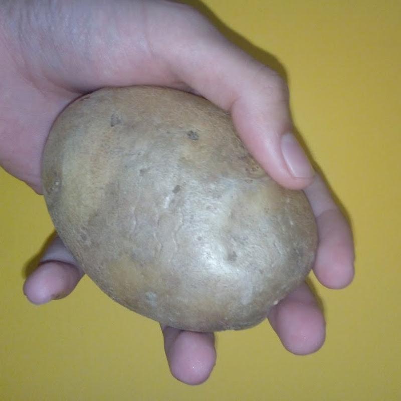 potato (potato1484)