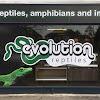 Evolution Reptiles