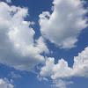 TheLittleFarmer