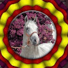 Miriam Frenk Andalusian Horses for Sale