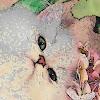 kittyflair