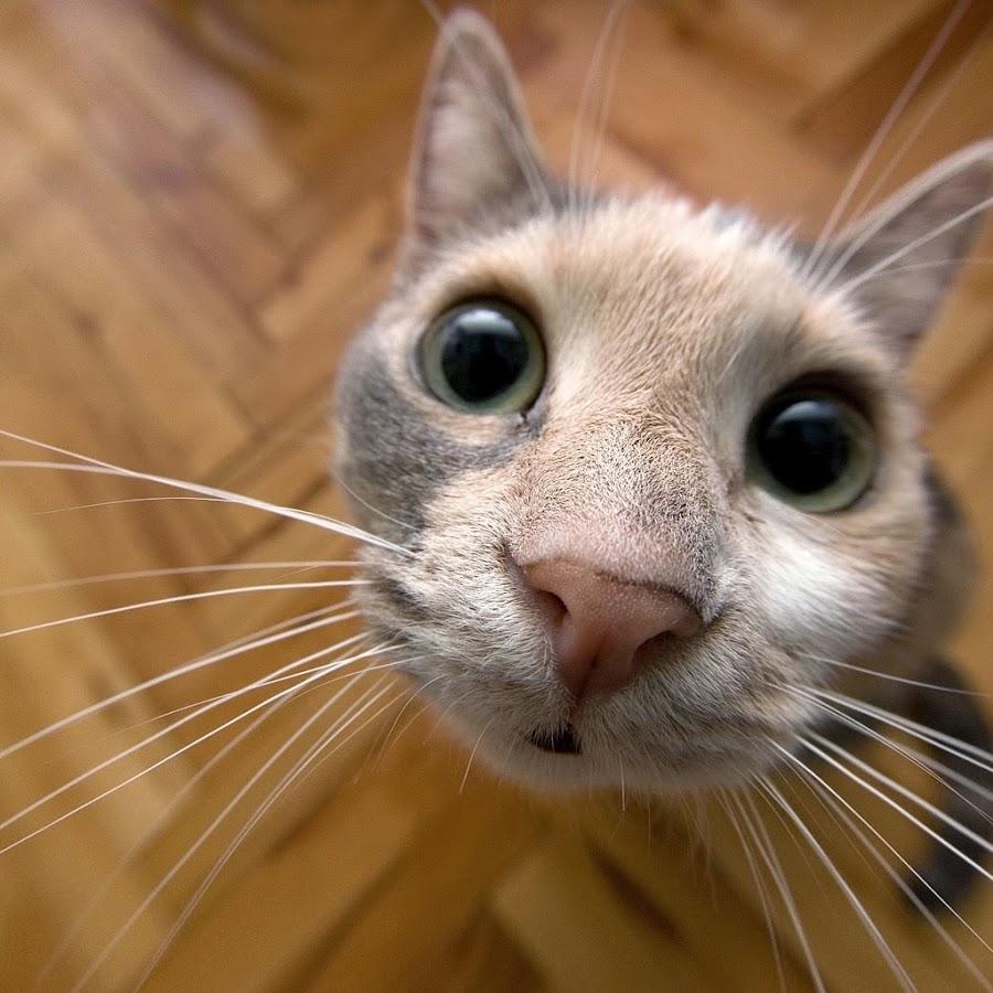 Карандаш, кошки картинки смешные все подряд