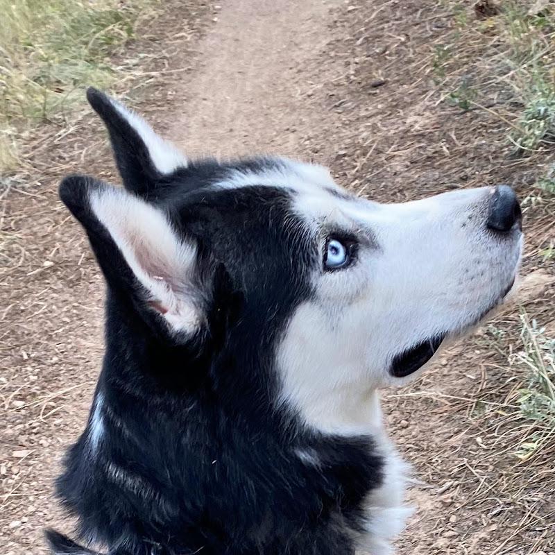 BengalCatVideos