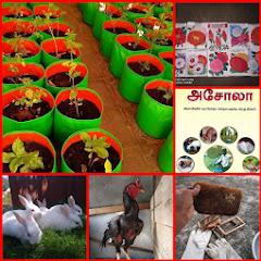 KURINJI CHEZHIYAN INTEGRATED FARM