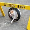 Jackson Bark
