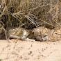 Sand Cat Sahara Team