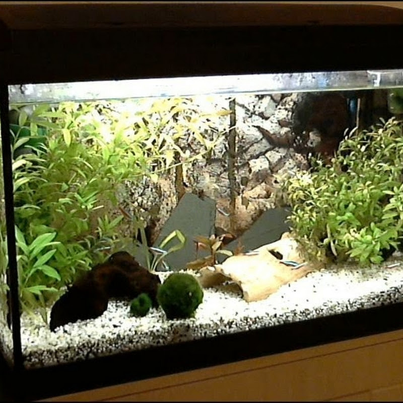 Aquarium Paffrathschale Selber Bauen Funnydog Tv